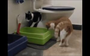 Higieniczny kotek