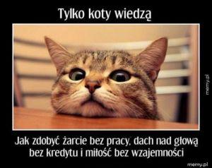 Koty wiedzą