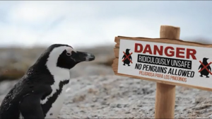 Pingwinom wstęp wzbroniony