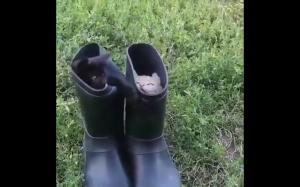 Koty w butach