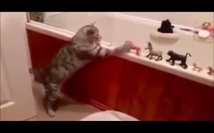 Koty są skomplikowane