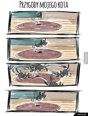 Przygody kota
