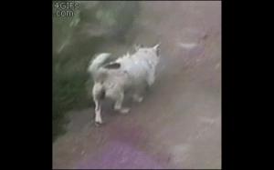 Kiedy swędzą Cię plecy, ale jesteś psem