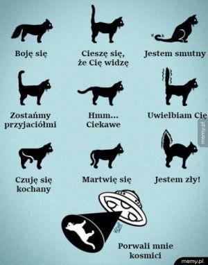 Jak koty okazują emocje