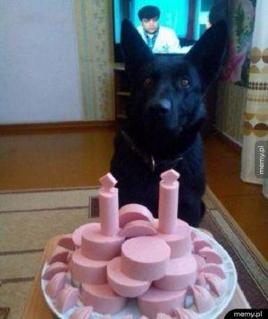 Idealny tort dla psa