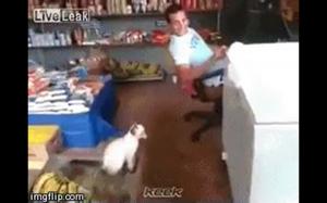 Pułapka na kota