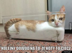 Koty to ciecz