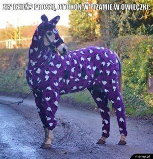 Zły dzień? Proszę, oto koń w piżamie w owieczki: