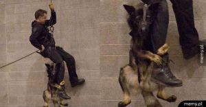 Pies policyjny podczas swojego pierwszego treningu: