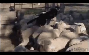 Rozwiązanie na korki