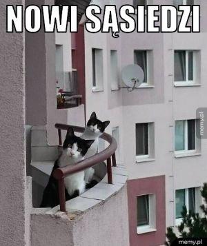 Nowi sąsiedzi.