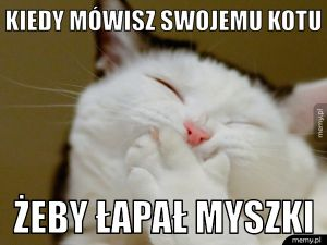 Domowe koty takie są