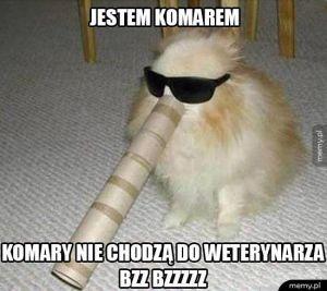 Bzz Bzzzz
