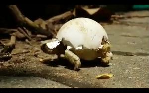 Chodzące jajko
