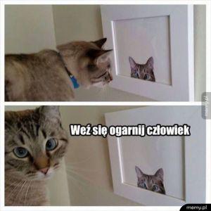 Zniesmaczony koteł