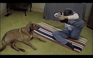 Kiedy nawet pies jest lepszy od ciebie