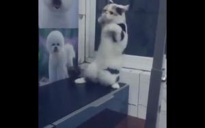 Gimnastyka z kotełem