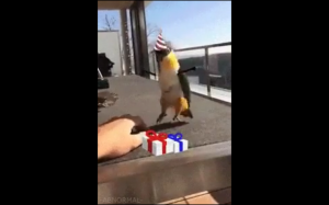 OMG OMG OMG te prezenty są dla mnie?