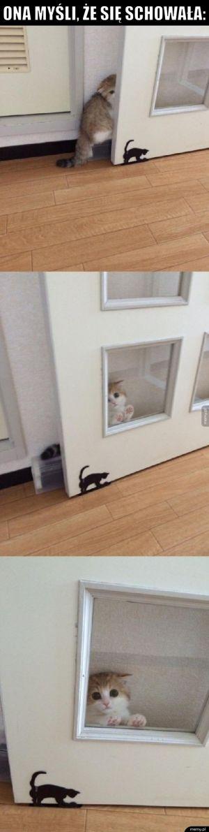 Nie widzę żadnego kotka
