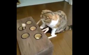 Jak zająć kota