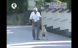 Czy twój kot by to zrobił?