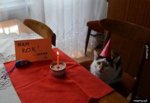 Urodziny koteła