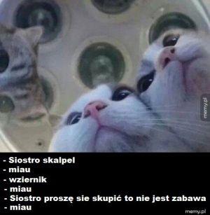 Koty robią operację