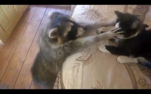 Chcę tego kotka!