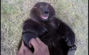 Wiesz że masz jaja gdy łaskoczesz niedźwiedzie po stópkach