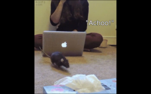 """""""Achoo!"""""""