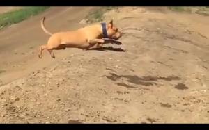 Perfekcyjny skok