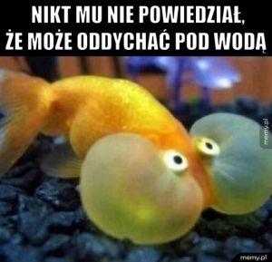 Rybeł