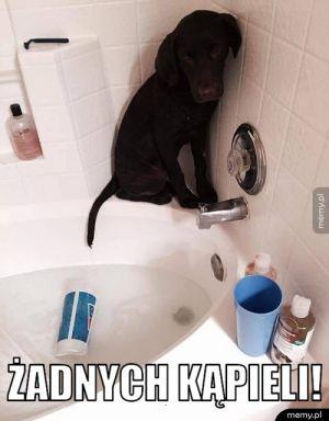Żadnych kąpieli!