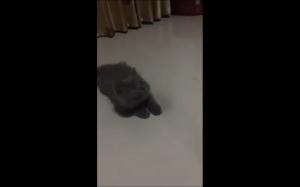 Co ten koteł