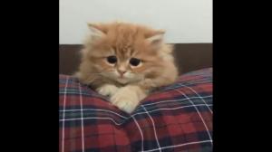 Kiedy sam oglądasz straszny film