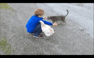 Nie chcesz kot? no to żałuj!