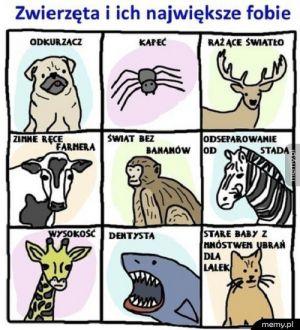 Zwierzęta i ich fobie