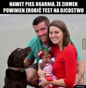 Nawet pies to wie