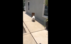 To nie jest najmądrzejszy pies na świecie