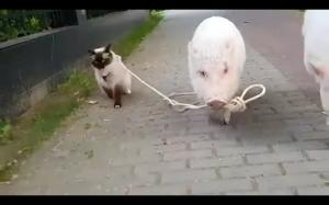 Kiedy Twoja dziewczyna postanowi wyjść z kotem na spacer