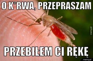 Pan komar
