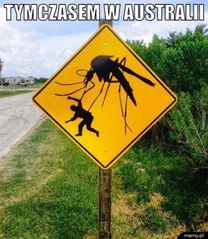 Zwyczajny znak drogowy
