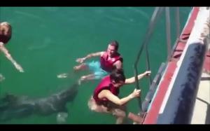Nigdy nie odwracaj się tyłem do delfina
