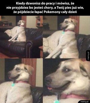 Twój pies już wie