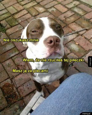 Psa nie oszukasz