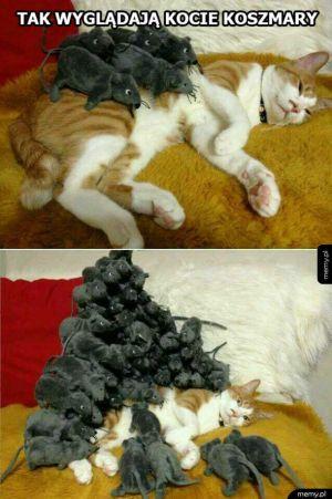 Kocie koszmary