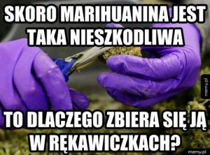 Marihuanen
