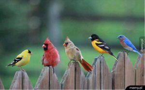 Kolorowe towarzystwo