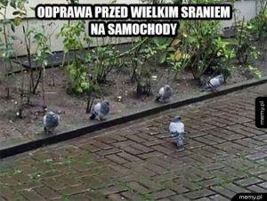 Armia gołębi