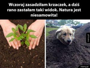 Natura jest piękna